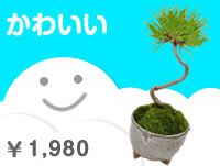 かわいい盆栽