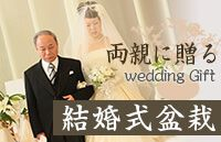 結婚式盆栽