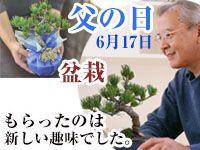 父の日盆栽