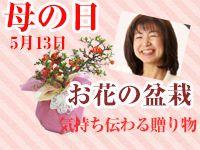 母の日盆栽